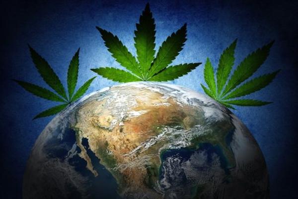 Marijuana's History How One Plant Spread Through the World