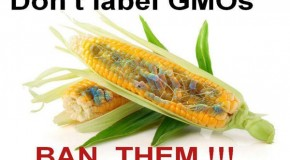 Labeling is a Bandaid – Ban GMOs Now!