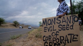 Monsanto, Dow Chemical File Lawsuit to Destroy Maui County's GMO Ban