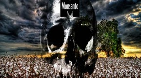 USDA Approves New Monsanto Cotton And Soy Crops
