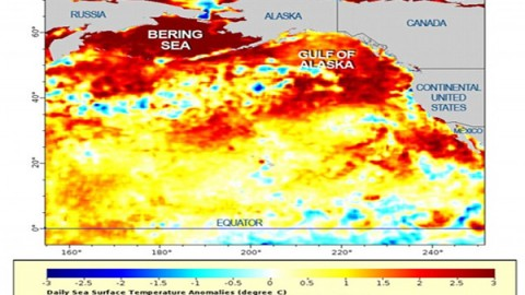 Mysterious Blob In Pacific Ocean Is Fukushima Death And It's Coming For Us All!