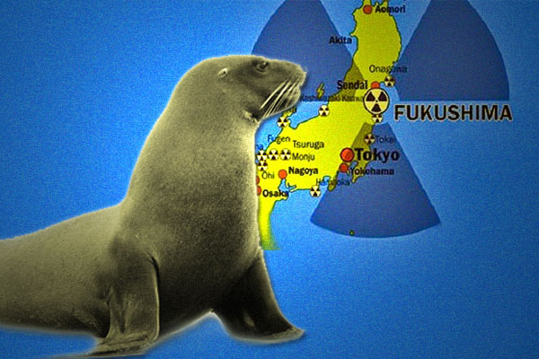 "More Fukushima Deaths ""Leukemia-linked Disorder"" Killing Baby Seals Along California Coast"